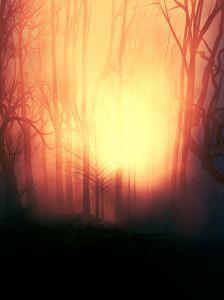 Illuminated Wood