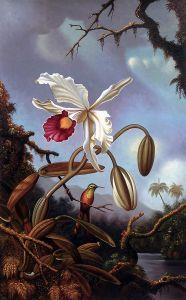 White Brazilian Orchid, 1875-1890