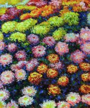 Bed of Chrysanthemums - 20