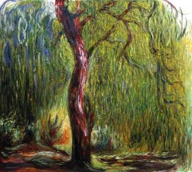 Weeping Willow - 24