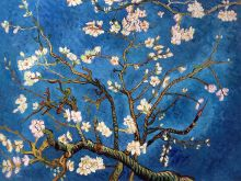 Branches of an Almond Tree in Blossom - 40
