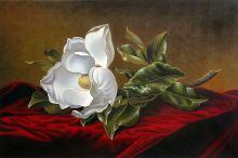 Magnolia Grandiflora, 1895