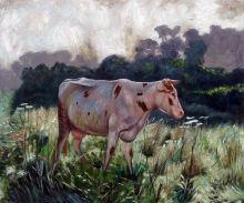 Cow (Study)