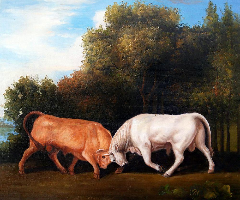 Bulls Fighting