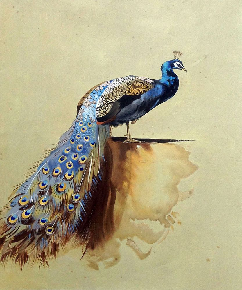 Peacock (Luxury Line)