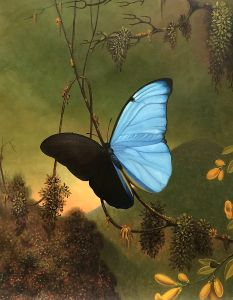 Blue Morpho Butterfly - 20