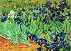 Irises - 36