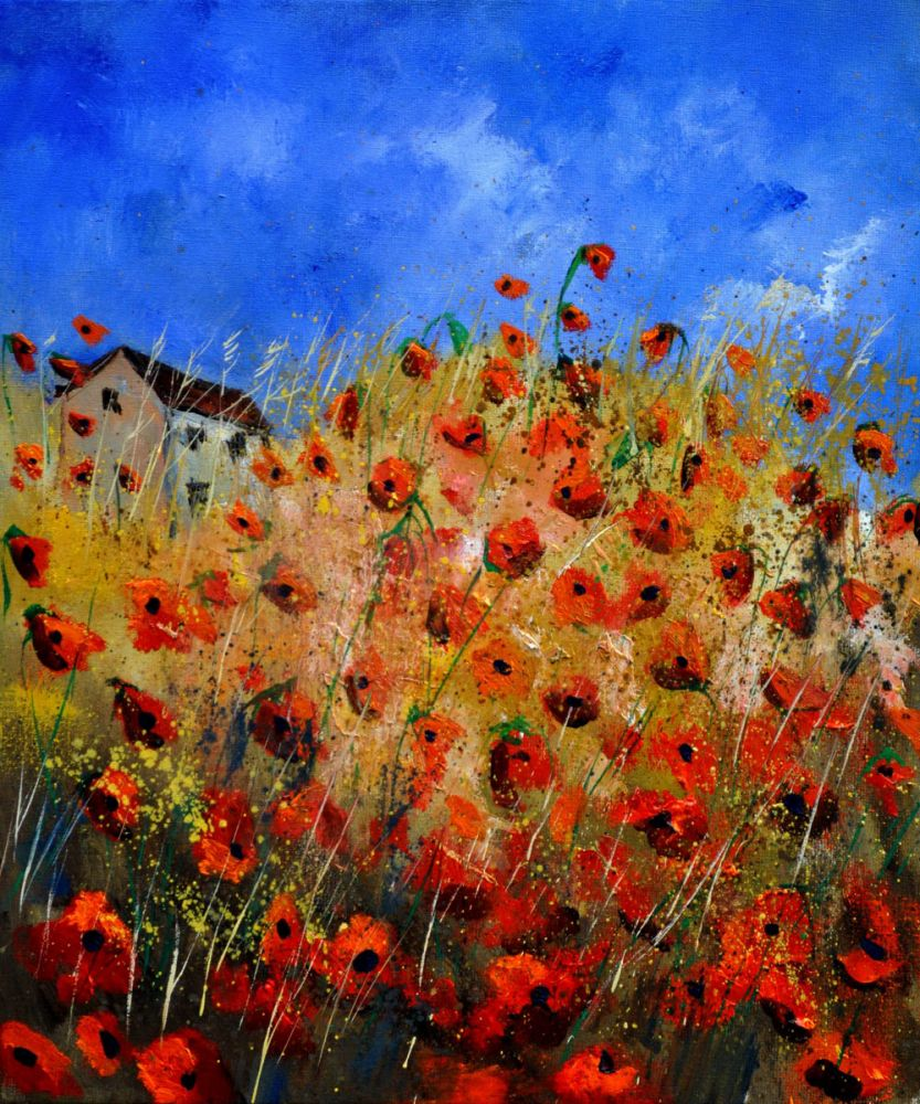 Red poppies 562111