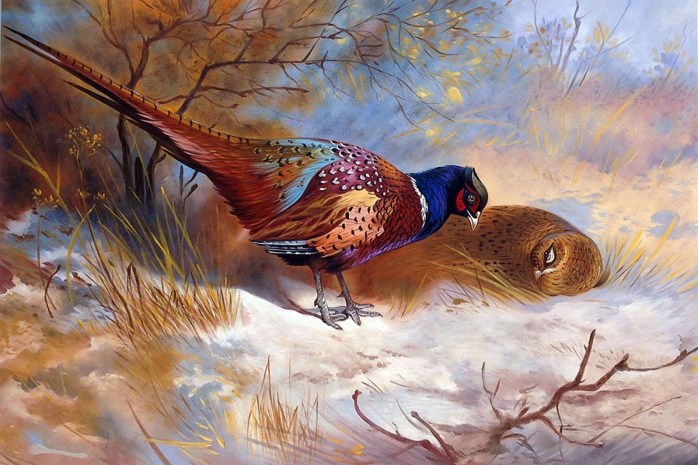 Pheasants, 1918