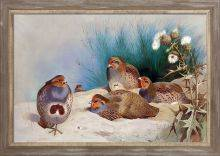 English Partridge with Gorse and Thistles Pre-Framed