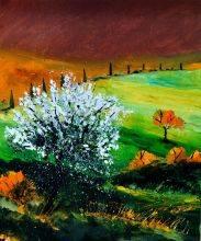 Tuscany 561170