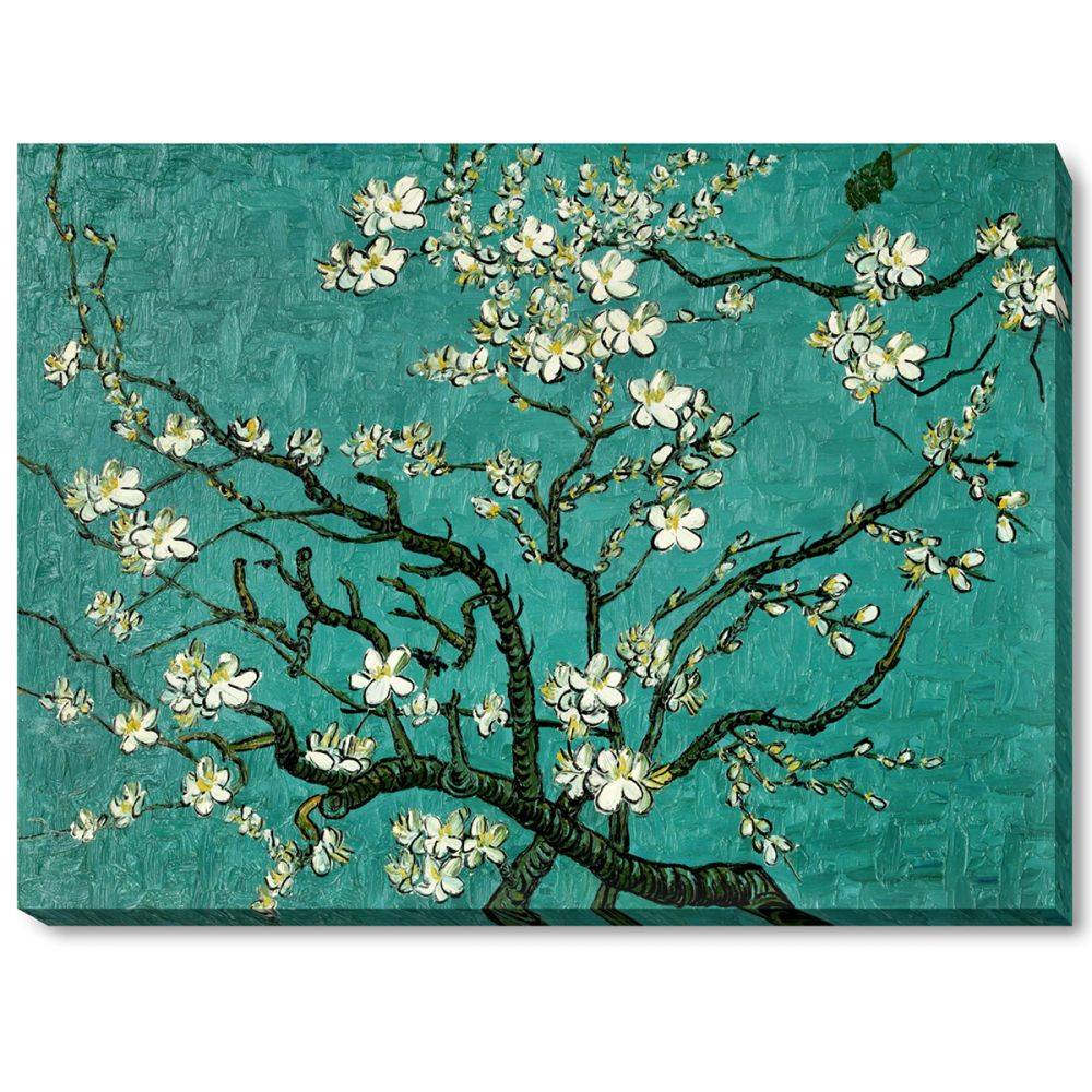 Branches of an Almond Tree in Blossom Gallery Wrap