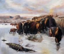 The Buffalo Herd