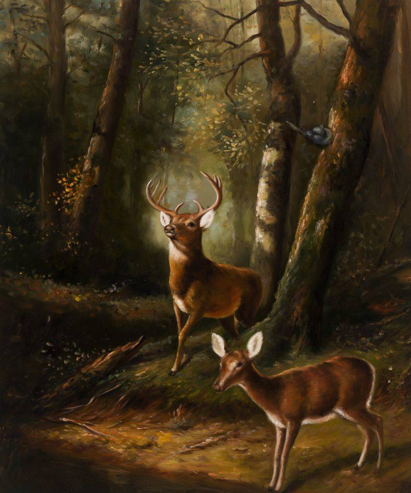 The Forest - Adirondacks