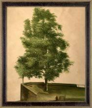 Linden Tree on a Bastion Pre-Framed