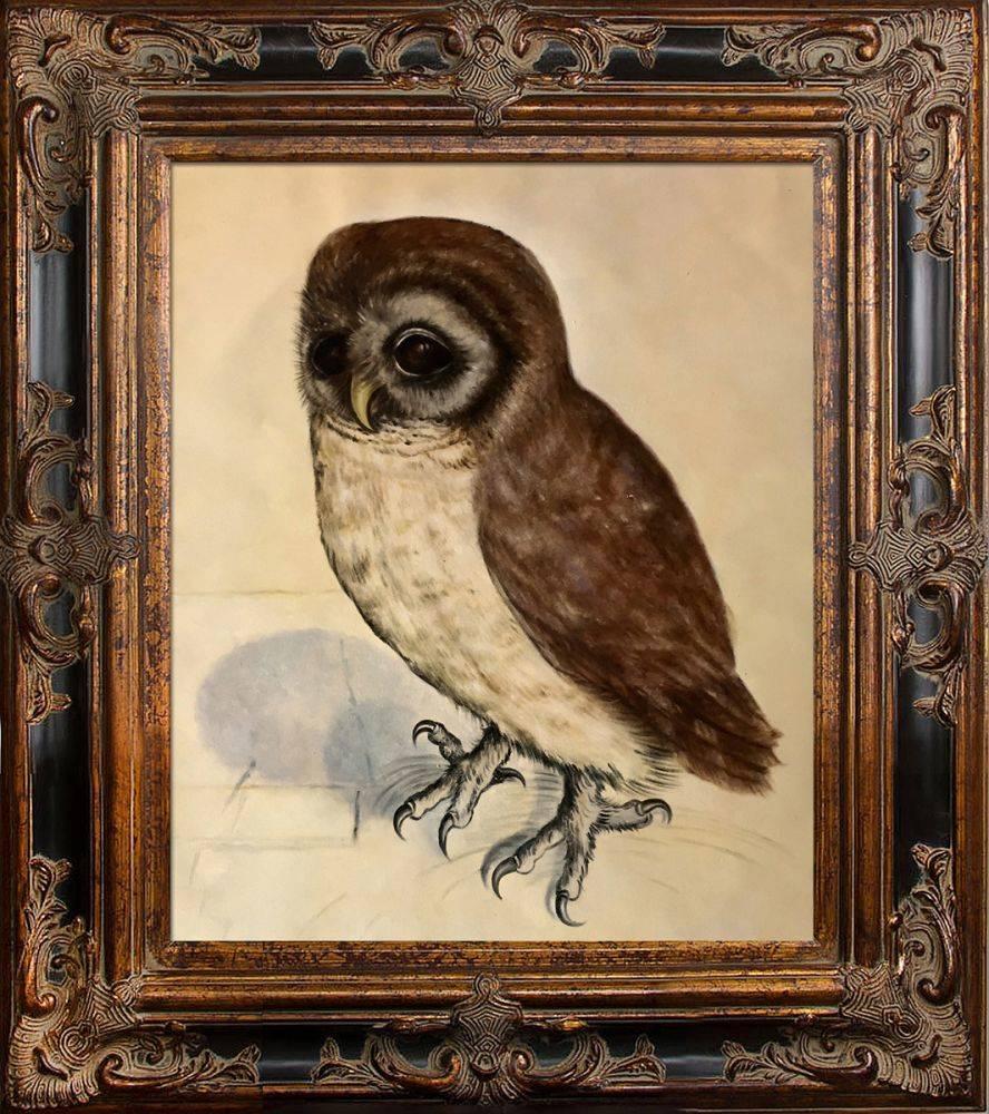 The Little Owl Pre-Framed