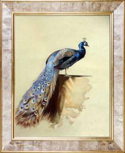 Peacock Pre-Framed