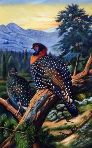 Western Tragopan (Tragopan Melanocephalus) 1918-22