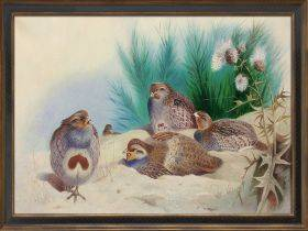 English Partridge with Gorse and Thistles, 1915 Pre-Framed