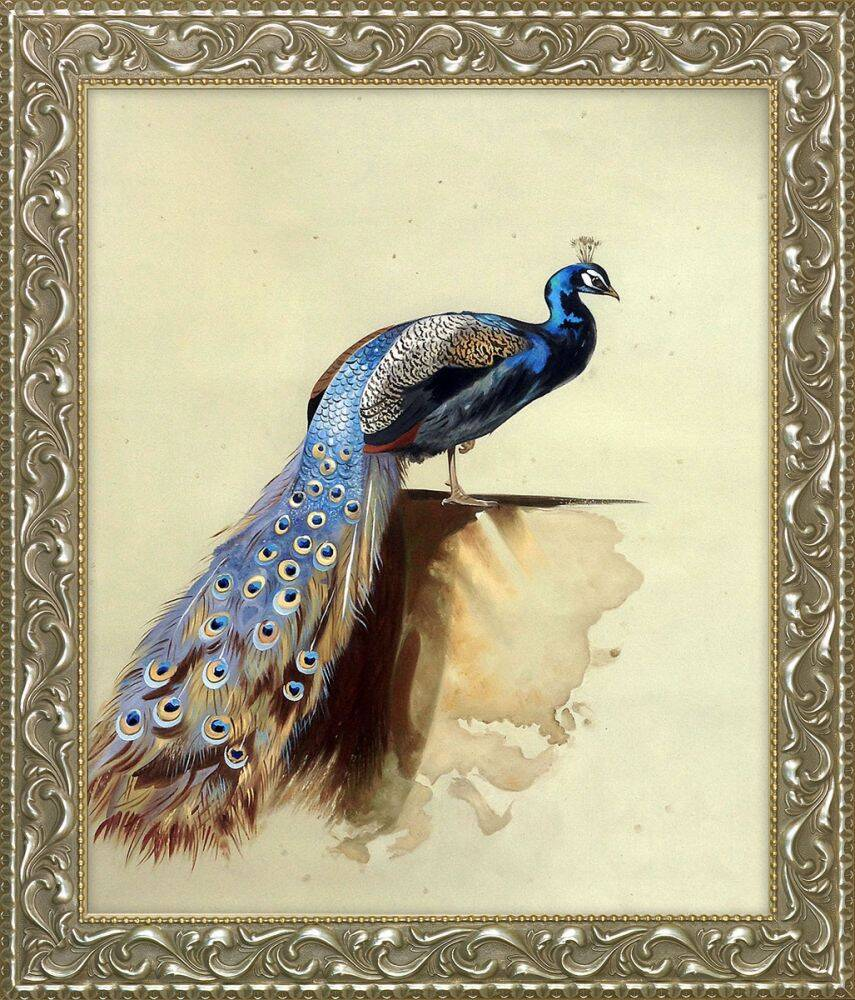 Peacock (Luxury Line) Pre-Framed
