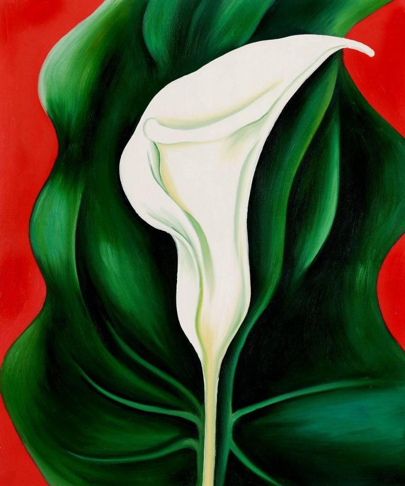 Single Calla Lily (Red), 1923