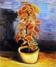 Coleus Plant in a Flowerpot