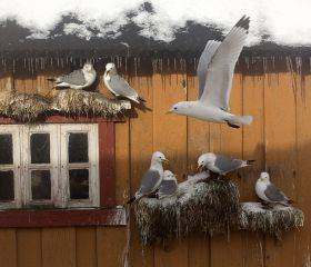 Gull House