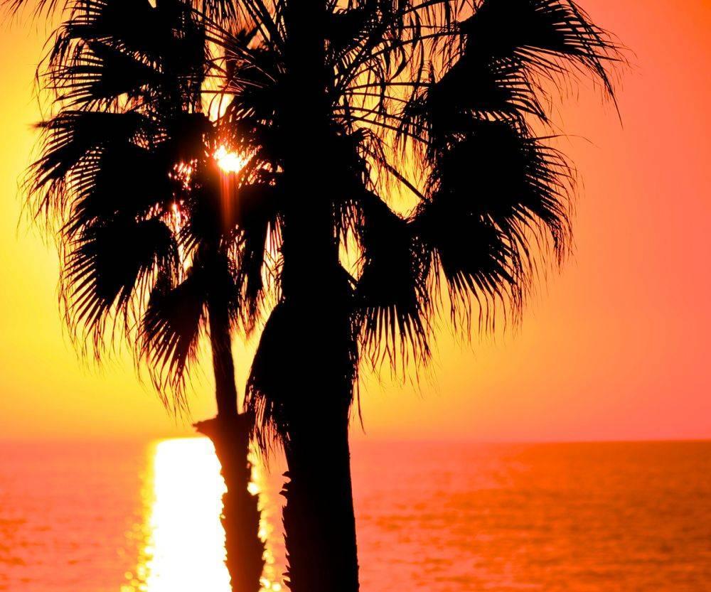 California Tropics