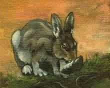 BunnyFoot