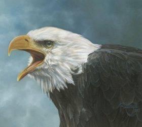 Bald Eagle Study
