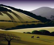 Napa Hills