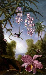 Orchids and Spray Orchids with Hummingbird, 1890